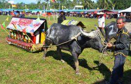 Pesta Babulang 2019